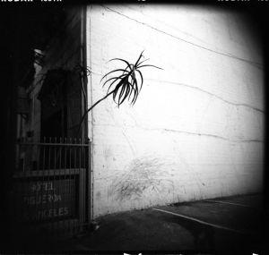 LA_figueroa.jpg