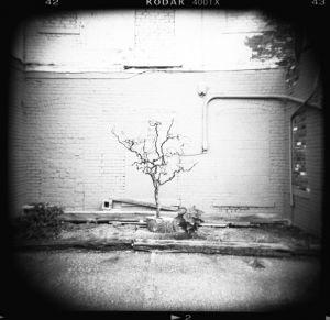 detroit_tree.jpg